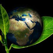 چگونه محیط زیست خود را حفظ کنیم