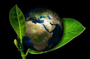 محیط زیست